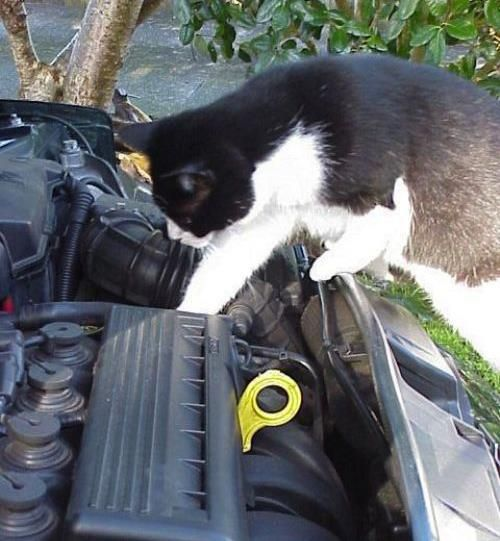 cat-mechanic