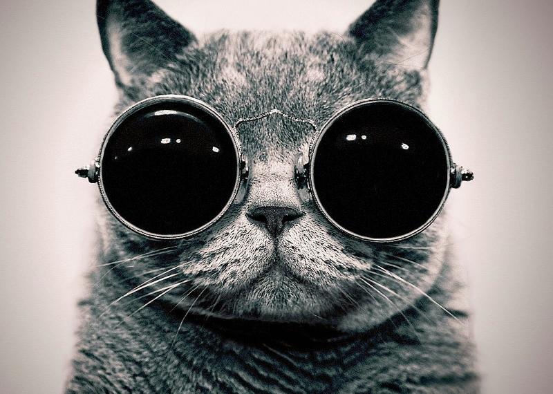 cat harley2